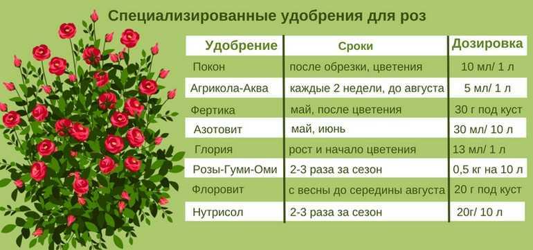 Удобрения для многолетних цветов, подкормка многолетников в саду на даче