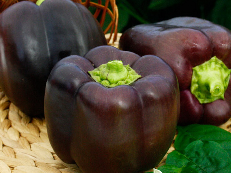 Сорта перца для открытого грунта: ранние, крупные, сладкие, урожайные, низкорослые, для сибири, подмосковья, средней полосы