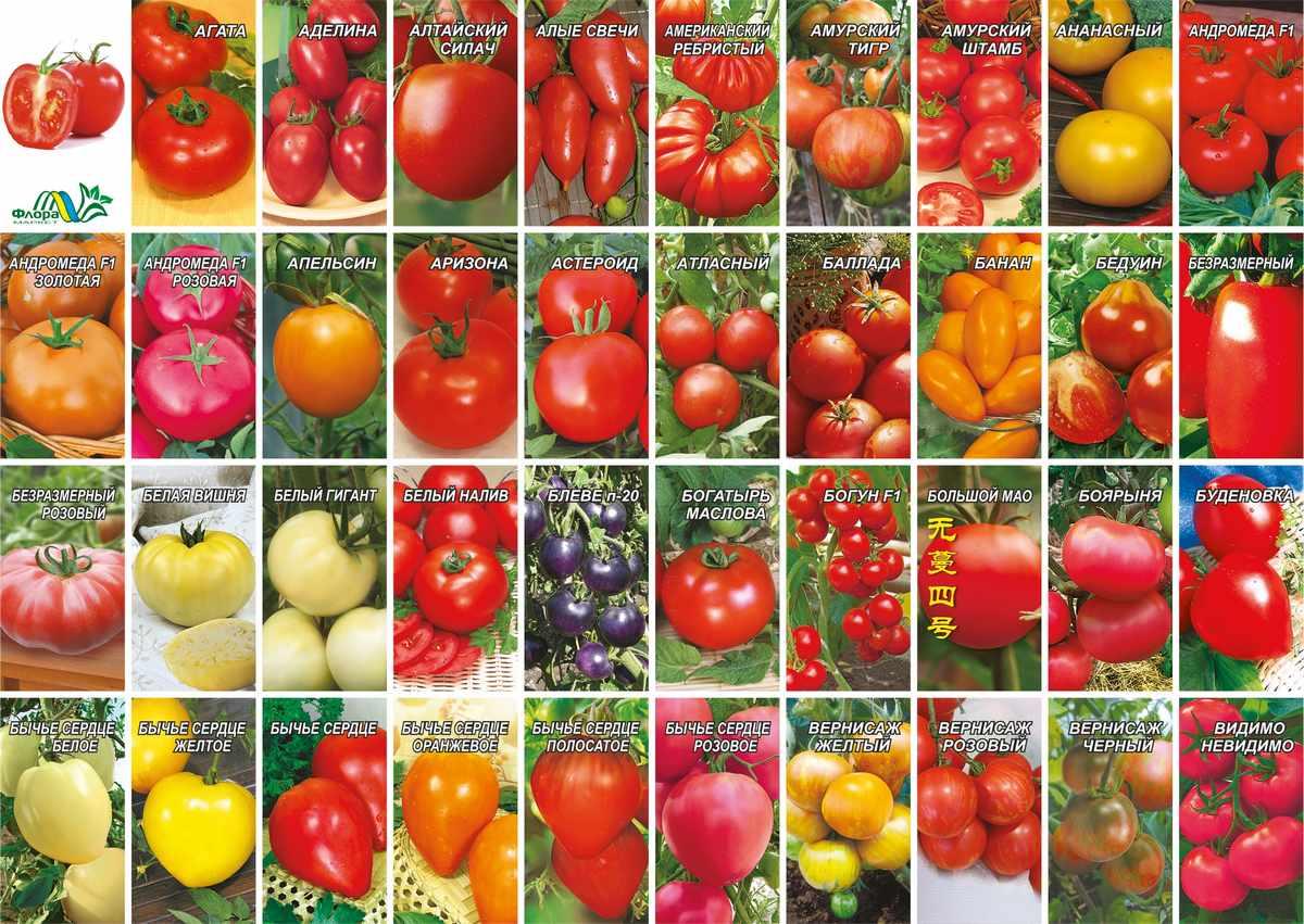 Сорта помидоров сибирской селекции для посадки в 2021 году в открытый грунт или теплицу