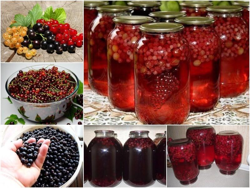 Заготовки на зиму из красной смородины: как можно заготовить ягоды с варкой и без нее, под какие крышки закрыть консервацию, как приготовить маринованные плоды