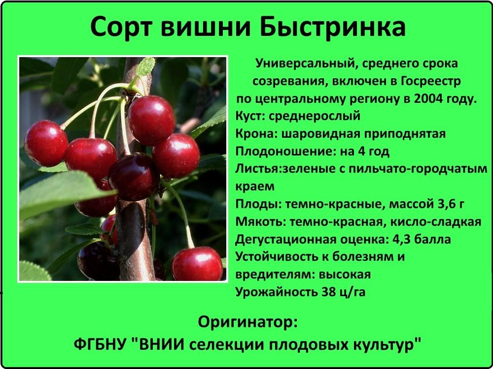 Выращивание черешни в подмосковье, сорта плодовых деревьев