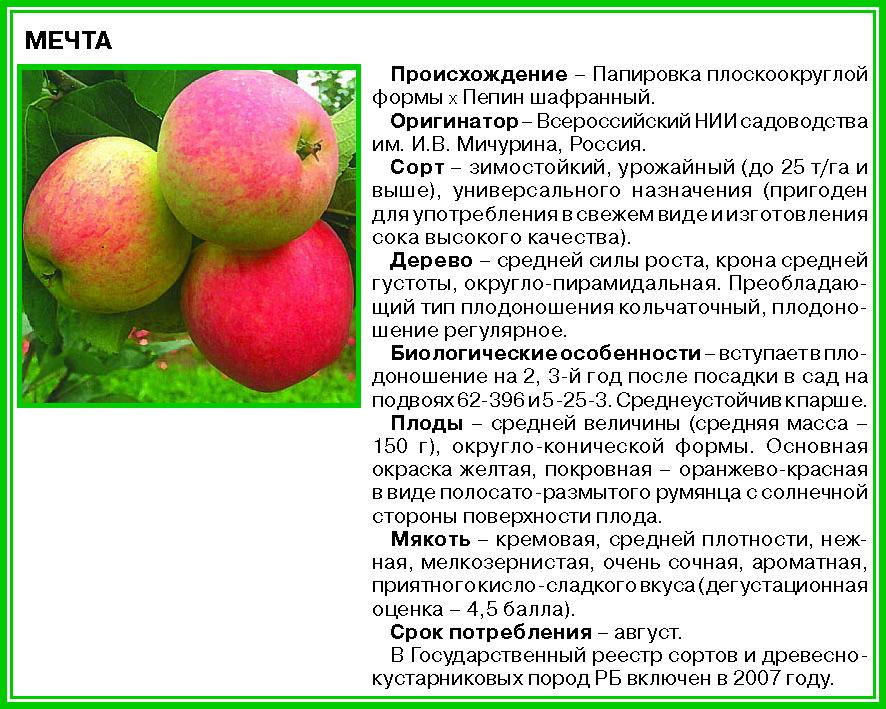 Яблоня чемпион: описание сорта и характеристики, видео и фото