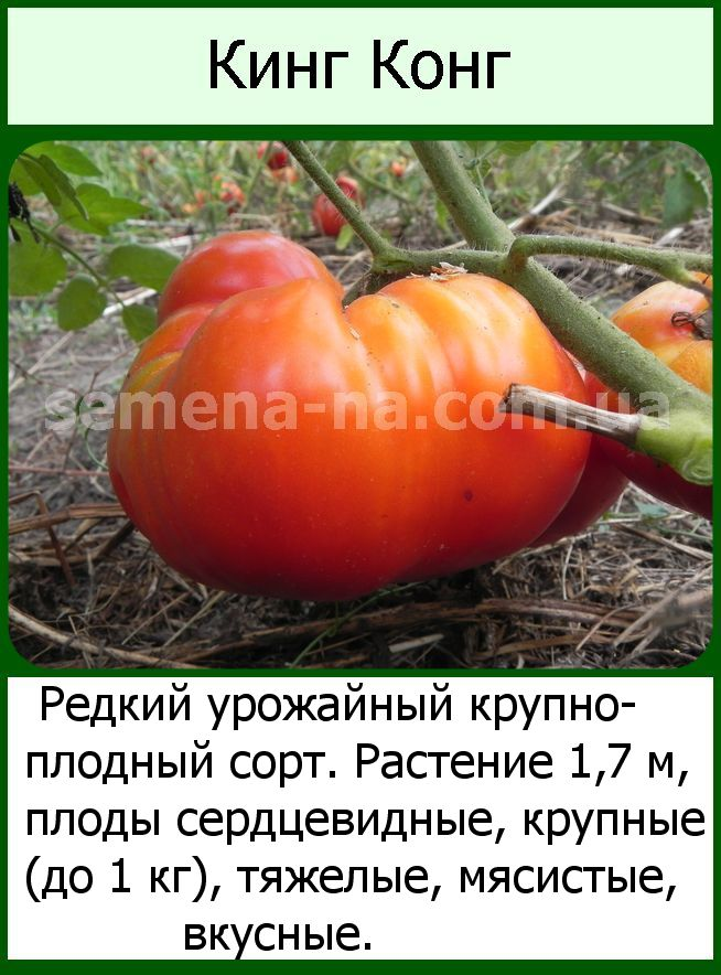 Описание сорта томата викинг, особенности выращивание и ухода
