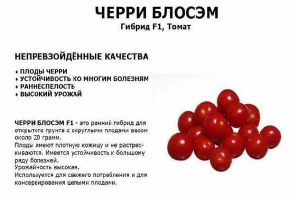 Помидоры черри: описание сорта с фото, основные характеристики, калорийность и чем полезны русский фермер