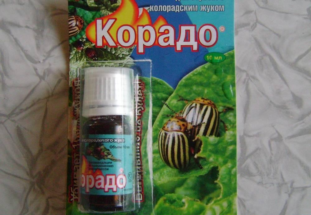 Корадо: популярный инсектицид от колорадского жука, тлей, луковой и морковной мухи