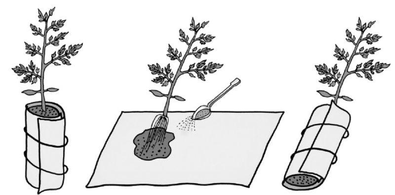 Рассада в пеленках: выращивание, пикировка, видео юлии миняевой