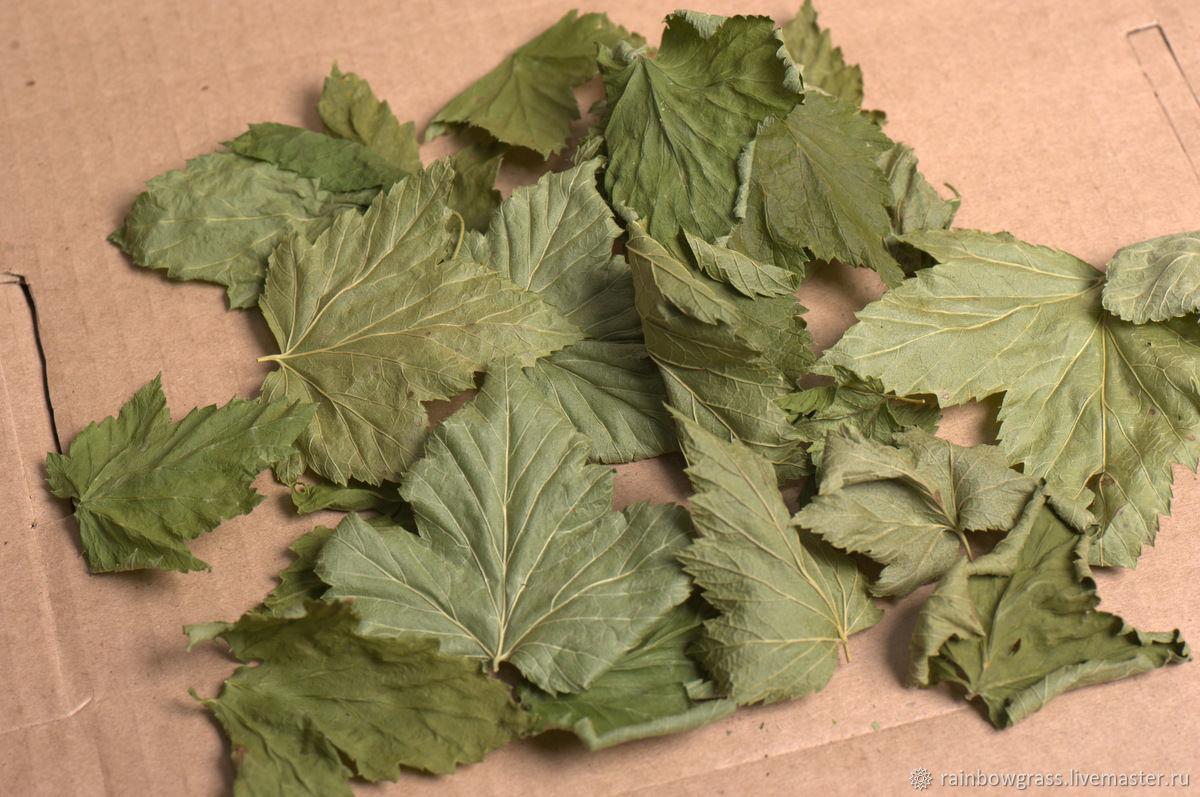 Как сушить лист смородины для чая на зиму