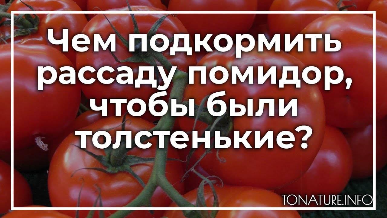 Когда и чем подкормить рассаду помидоров: график, в какие сроки начинать удобрять томаты в теплице и что делать – схема работ, расписанная в таблице русский фермер