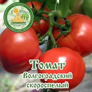 Томат волгоградский скороспелый 323   вырасти сад!