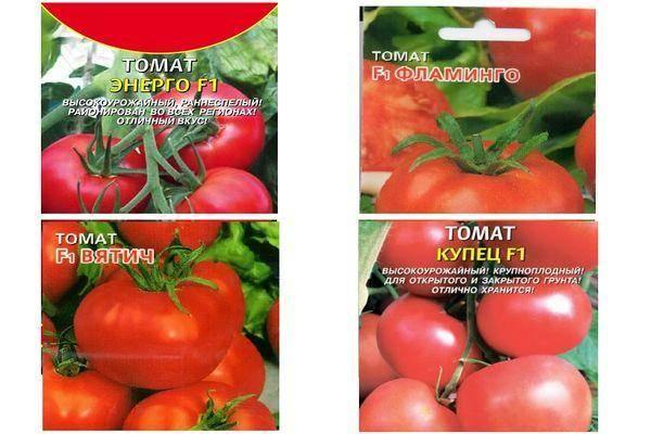 Лучшие сорта томатов для кировской области