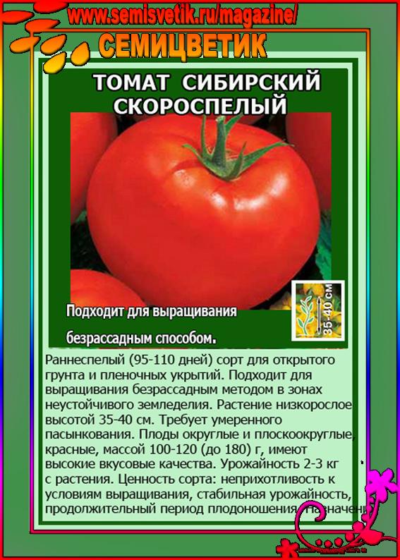 Безрассадный способ выращивания томатов. чем он привлекателен для огородников? | растения