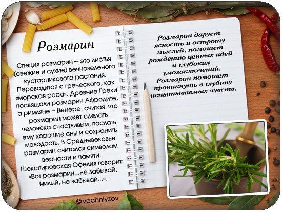 Лечебные свойства розмарина: применение, рецепты - agroflora.ru