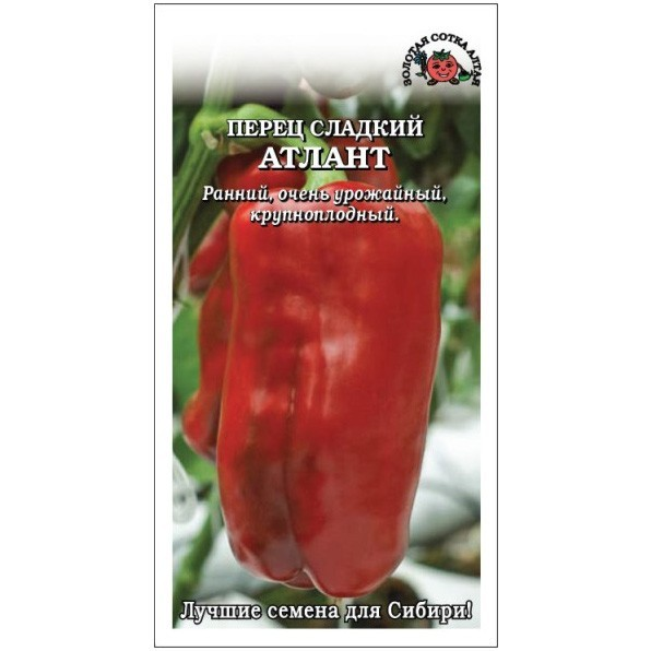 Перец атлант: характеристика и описание сорта, выращивание и уход