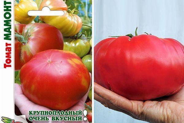 Особенности выращивания крупноплодных томатов (помидоров) на supersadovnik.ru