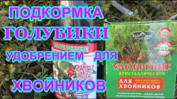 Как и чем подкормить голубику садовую летом и весной, пропорции, как применять органические и минеральные удобрения, уксус, лимонную кислоту, коллоидную серу, электролит