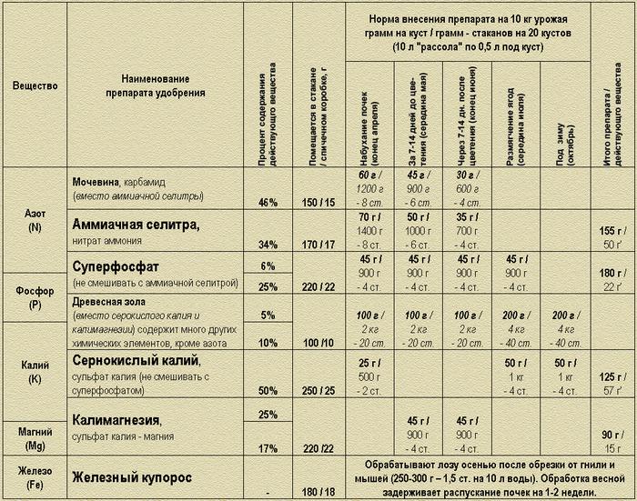 Горчица, йод, перекись и марганцовка: все основные народные средства для обработки растений на supersadovnik.ru