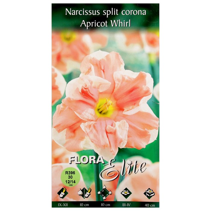 Нарцисс таити - фото описание + топ советов по посадке и уходу