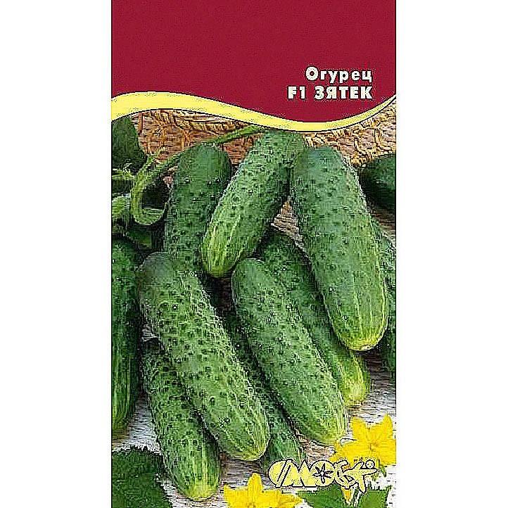 Огурец дядя степа: отзывы, фото, урожайность