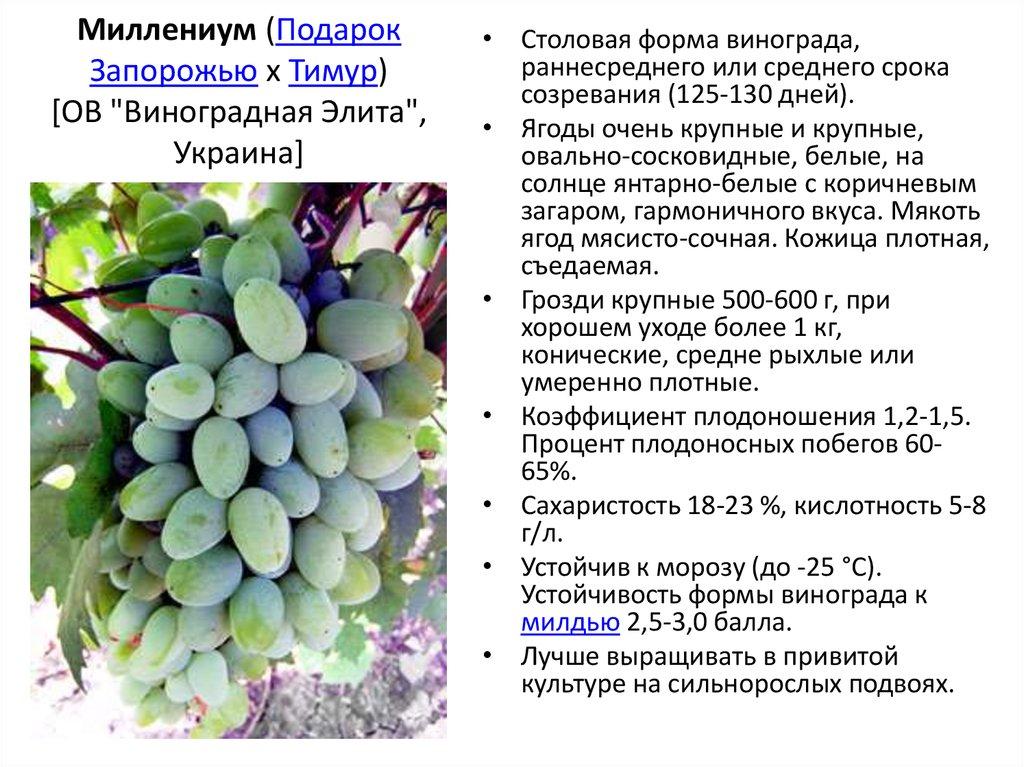 Сорт винограда ливия: что нужно знать о нем, описание сорта, отзывы