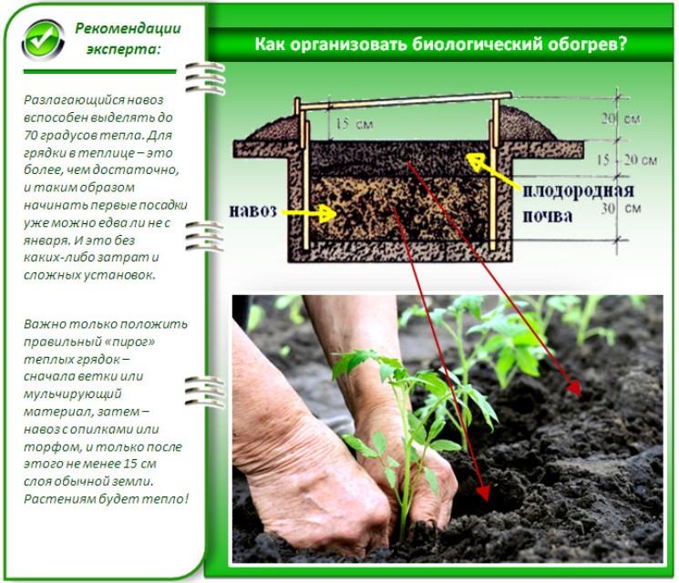 Как подготовить почву для огурцов в теплице весной перед посадкой