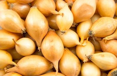 Лук стурон: описание сорта, отзывы, фото, урожайность, достоинства и недостатки и особенности выращивания