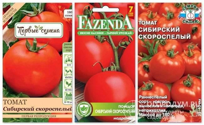 Сибирский скороспелый – холодоустойчивый ранний сорт помидоров