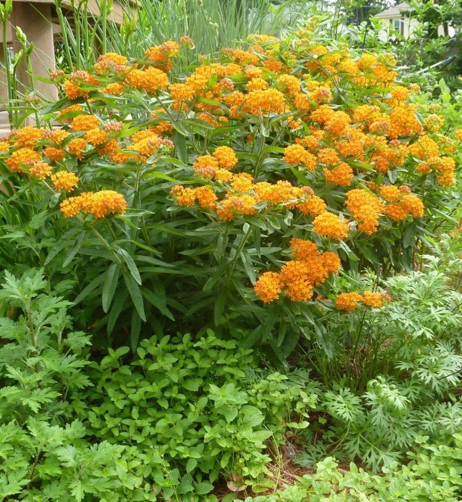 Многолетние цветы для сибири: самые неприхотливые и долгоцветущие, обзор с фото