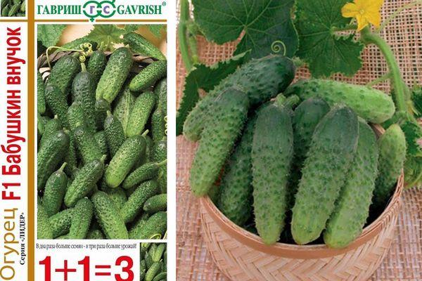 Фото, видео, описание, посадка, характеристика, урожайность, отзывы о раннеспелом гибриде огурцов «бабушкин внучок f1»