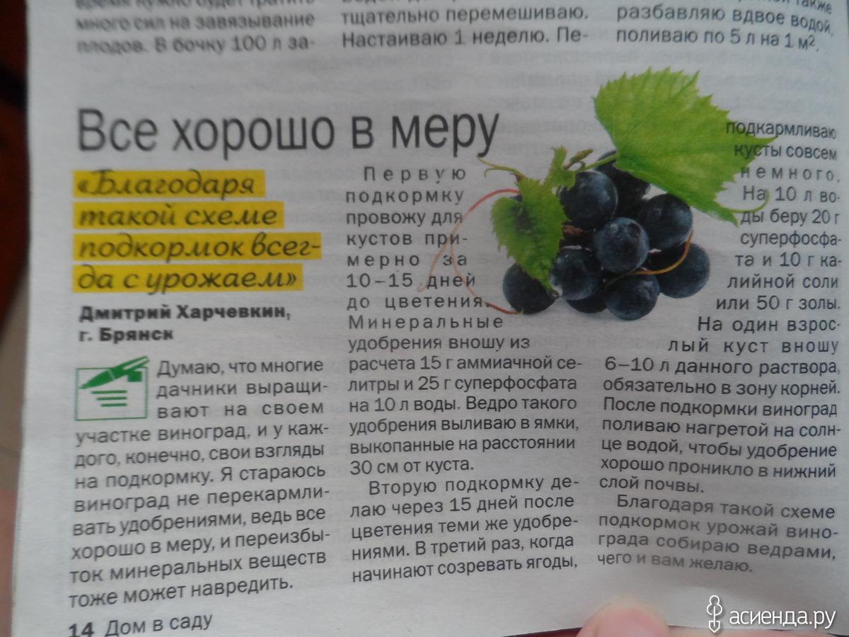 Полив винограда весной, когда нужно поливать