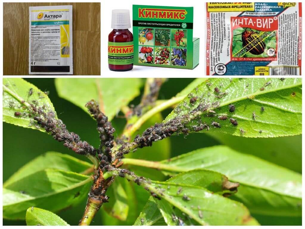 Биопрепараты для борьбы с вредителями и болезнями растений