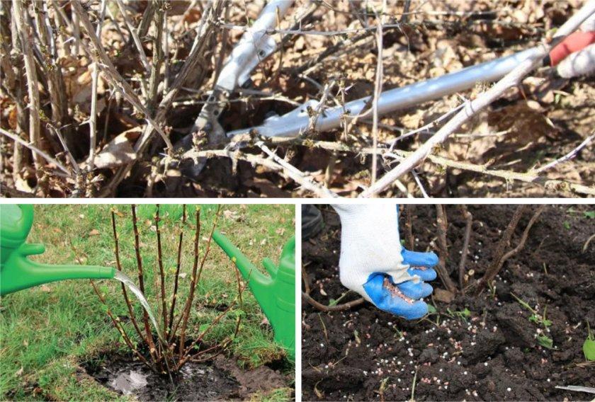 Чем подкормить сливу весной, летом и осенью? - секреты садоводов