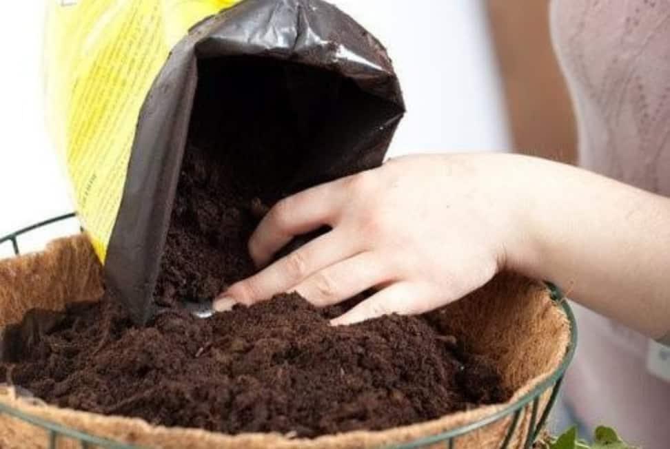 Все о здоровом грунте: состав, способы подготовки, обзор типов