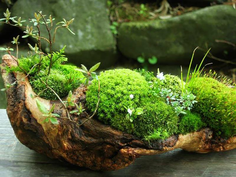 Мох на подоконнике. как вырастить дома кусочек леса - домашние растения