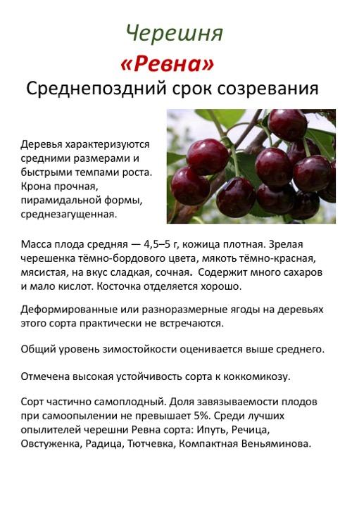 Сорт черешни крупноплодная: описание, отзывы