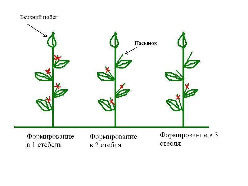 Как правильно формировать перец в открытом грунте и теплице