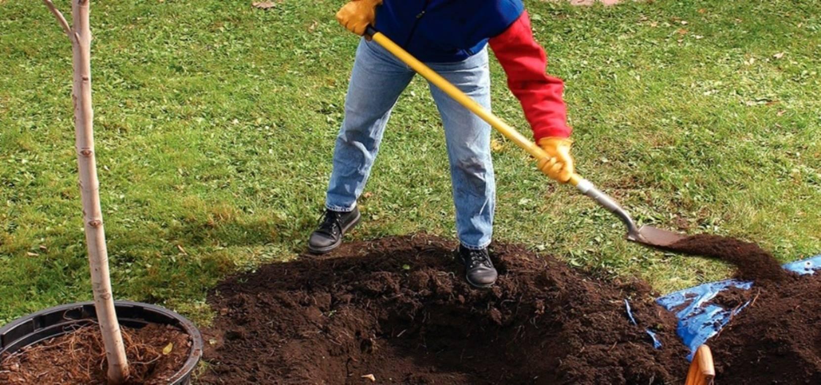 Как ухаживать за черешней весной на даче после зимы, чтобы был хороший урожай: советы и правила по уходу