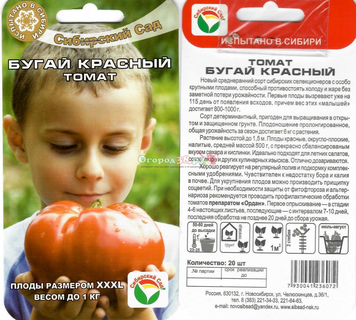Особенности томатов: популярные сорта, уход, болезни