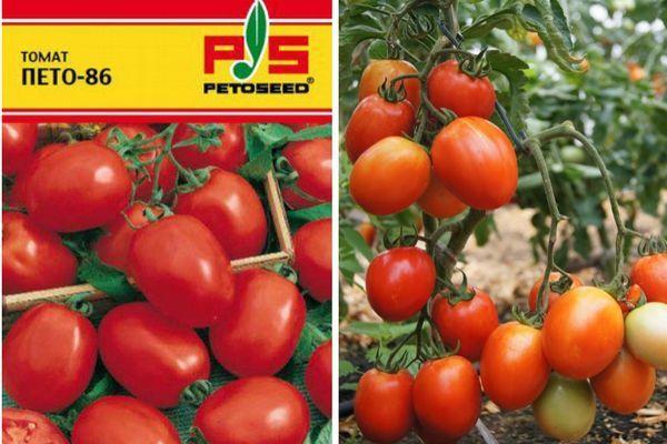 Описание сорта томата Пето 86, преимущества и агротехника выращивания