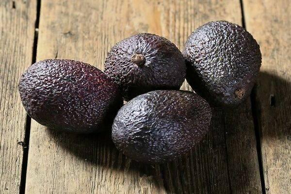 Авокадо хаас: характеристики и важные особенности фрукта