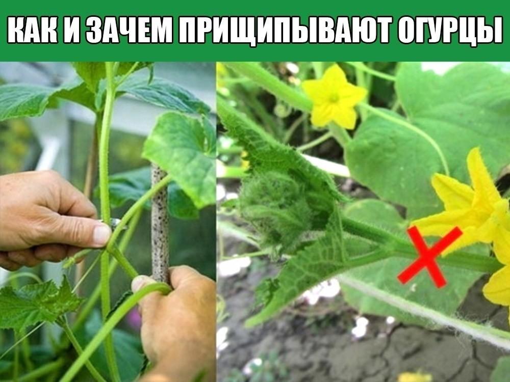 Что сделать, чтоб тыква не сбрасывала завязь. почему не завязываются тыквы? | дачная жизнь