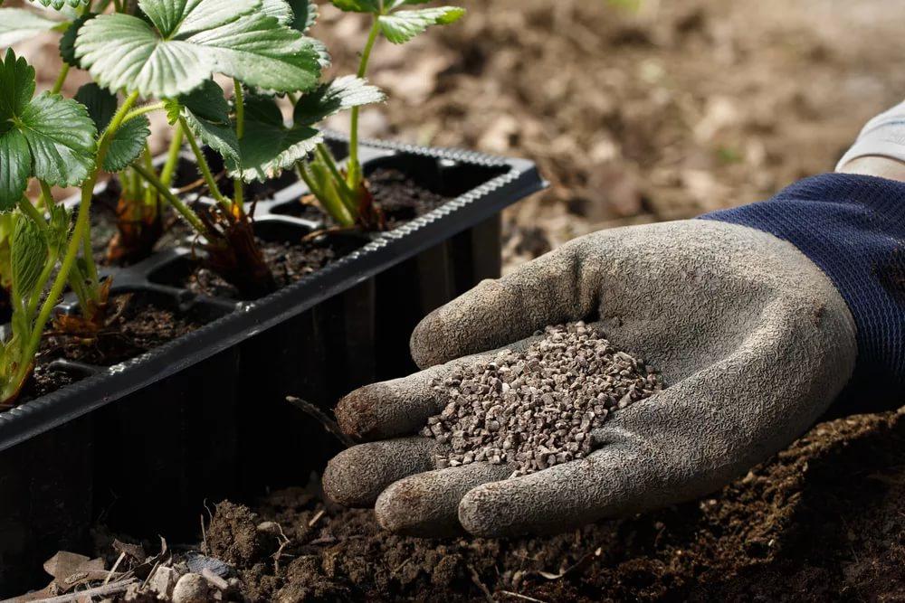 Ранние посевы овощей