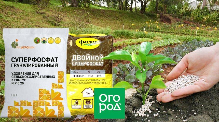 Виды и инструкция по применению суперфосфатного удобрения, состав и правила обработки