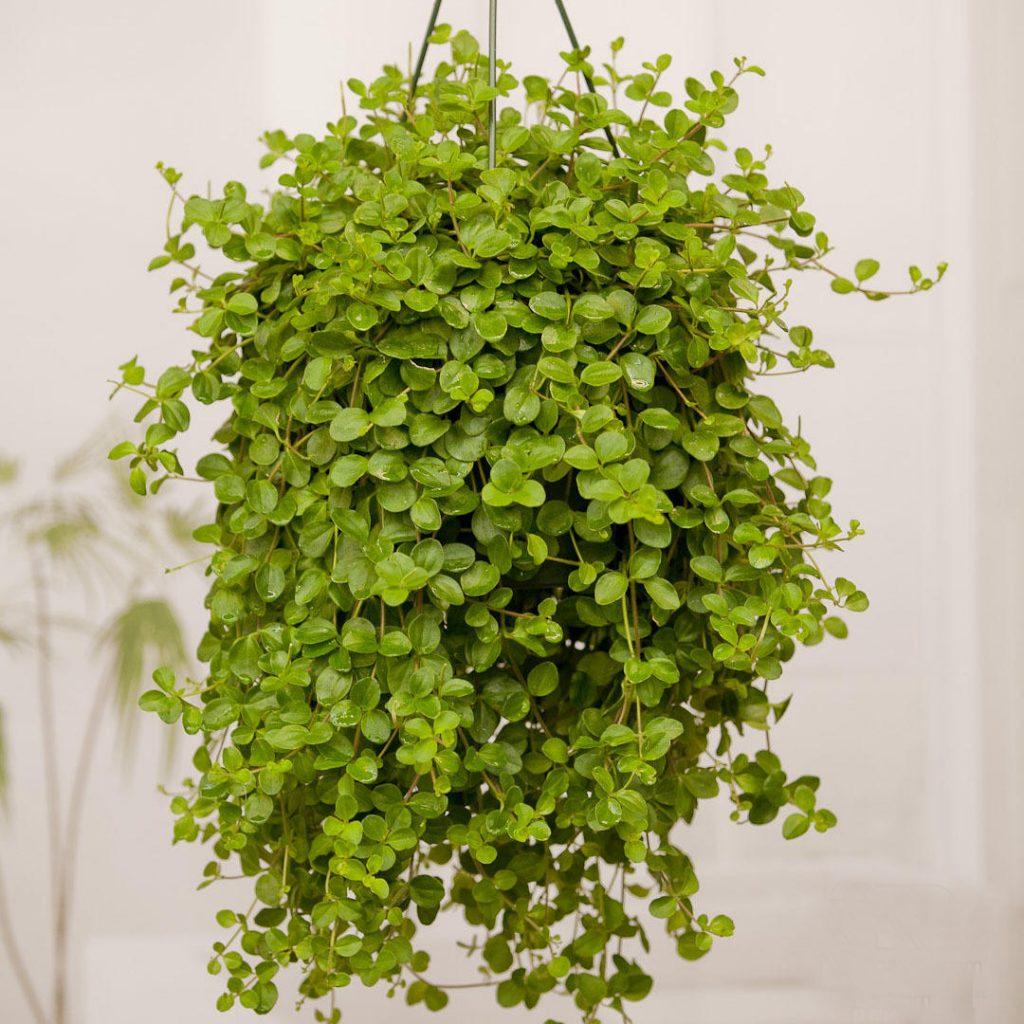 Лучшие ампельные растения для вашего сада