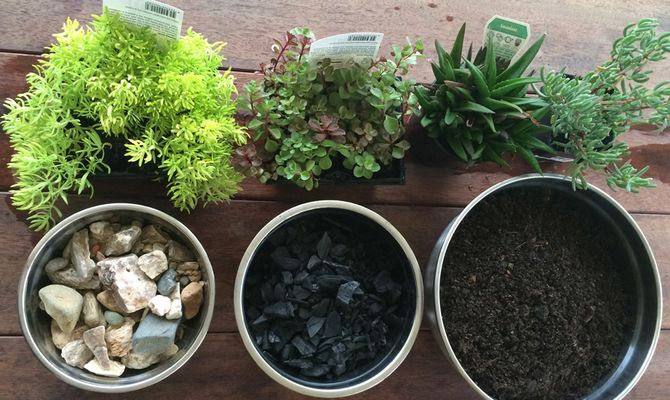 Комнатные растения: какой дренаж лучше, и что использовать в качестве дренажа