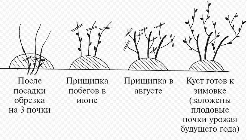 Правила и секреты ухода за вишней в разные периоды роста на даче