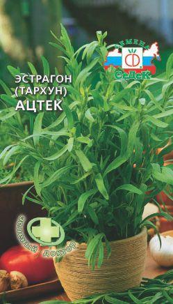 Эстрагон – выращивание и уход