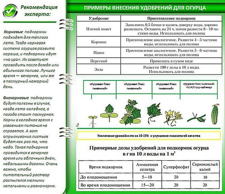 Внекорневая подкормка огурцов в теплице и в открытом грунте: сроки и правила внесения