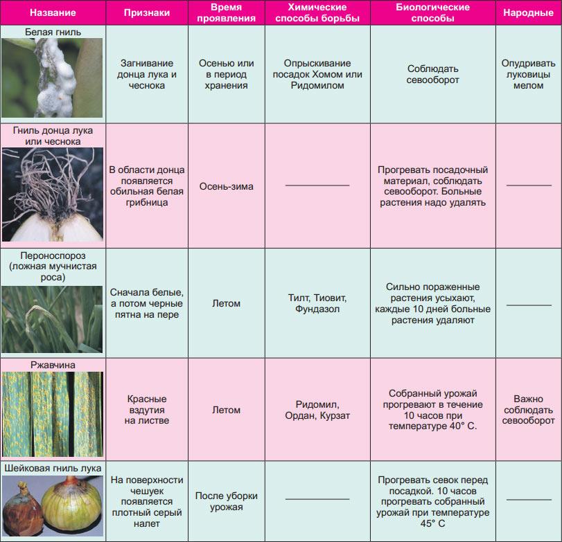 Пуллороз кур лечение. что такое сальмонеллез, пуллороз и тиф домашней птицы? признаки болезни у птенцов, вылупившихся из обсемененных яиц