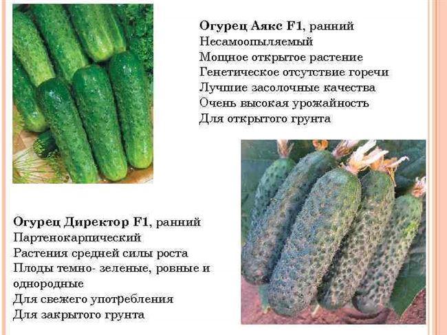 Сорт огурцов аякс: описание и характеристика, способы посадки и особенности ухода, фото