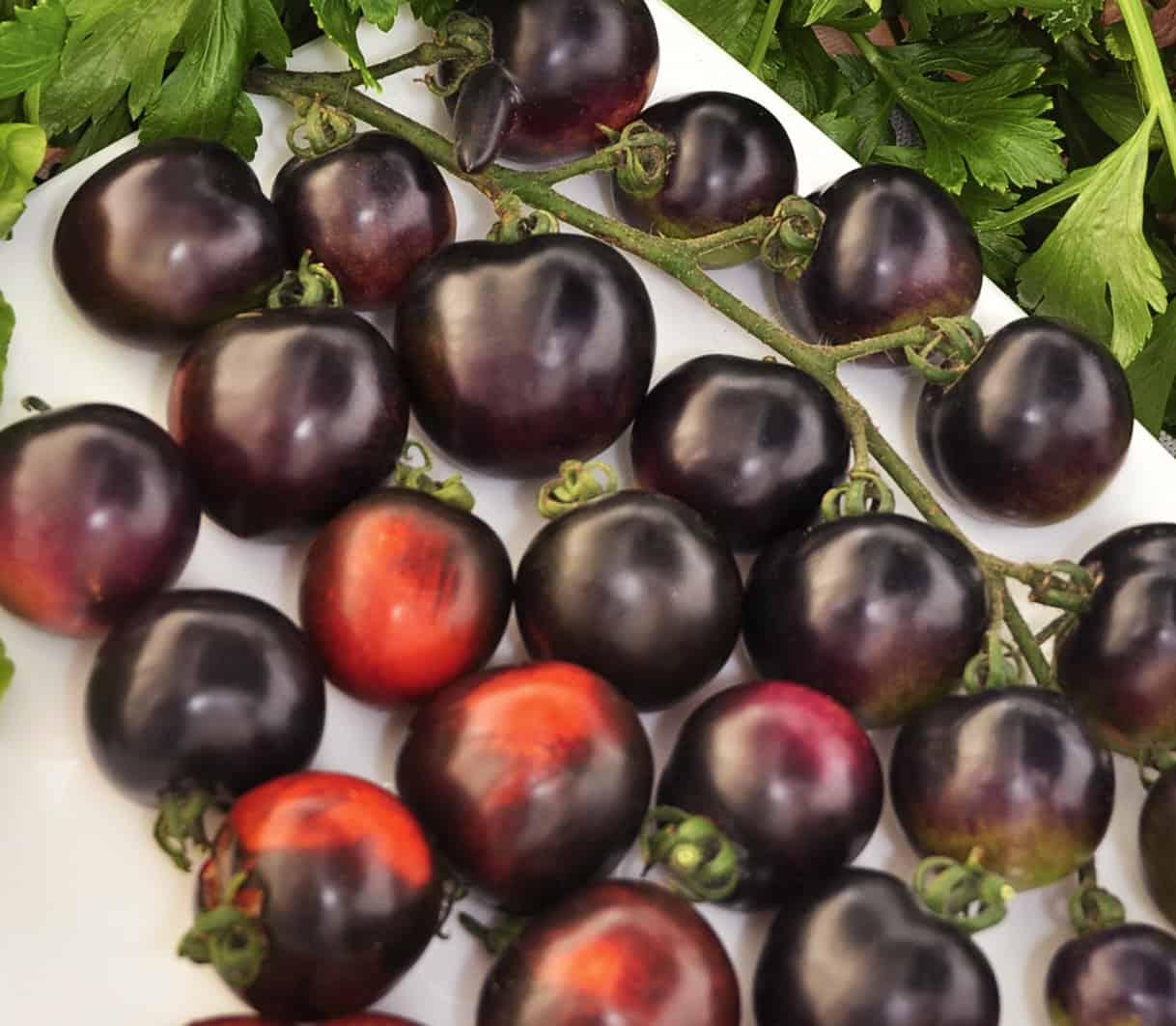 Томат гроздевой